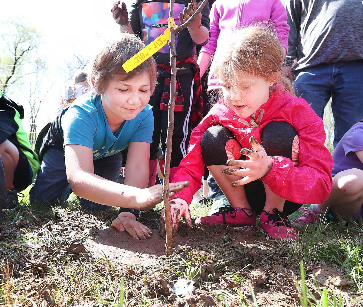 Holmen students plant apple trees