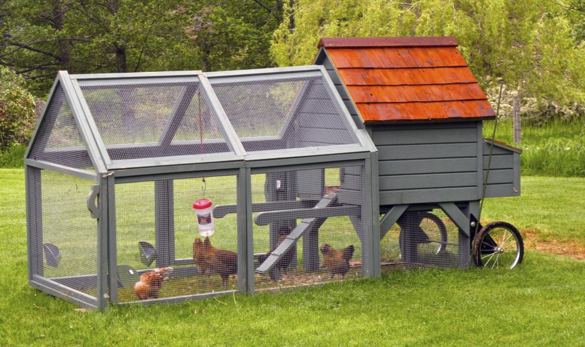county to allow chickens and other animals in residential