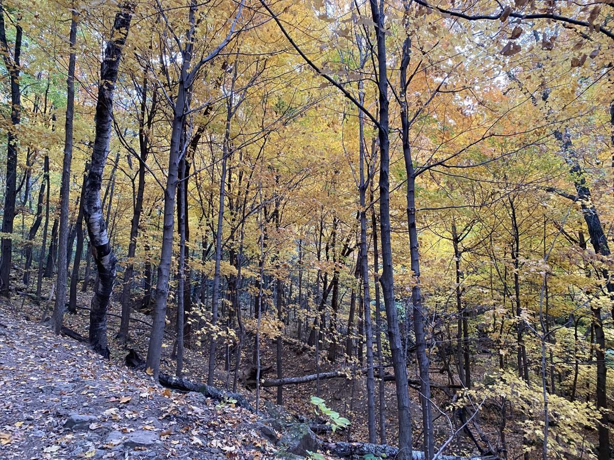 Miller Bluff trail