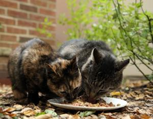 Scientists tally the environmental impact of feeding meat to our cats and dogs -- and it's huge