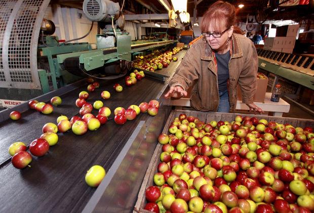 092114-lt-fea-biz-apples-1