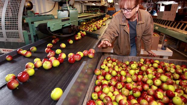 Gays mills apple fest