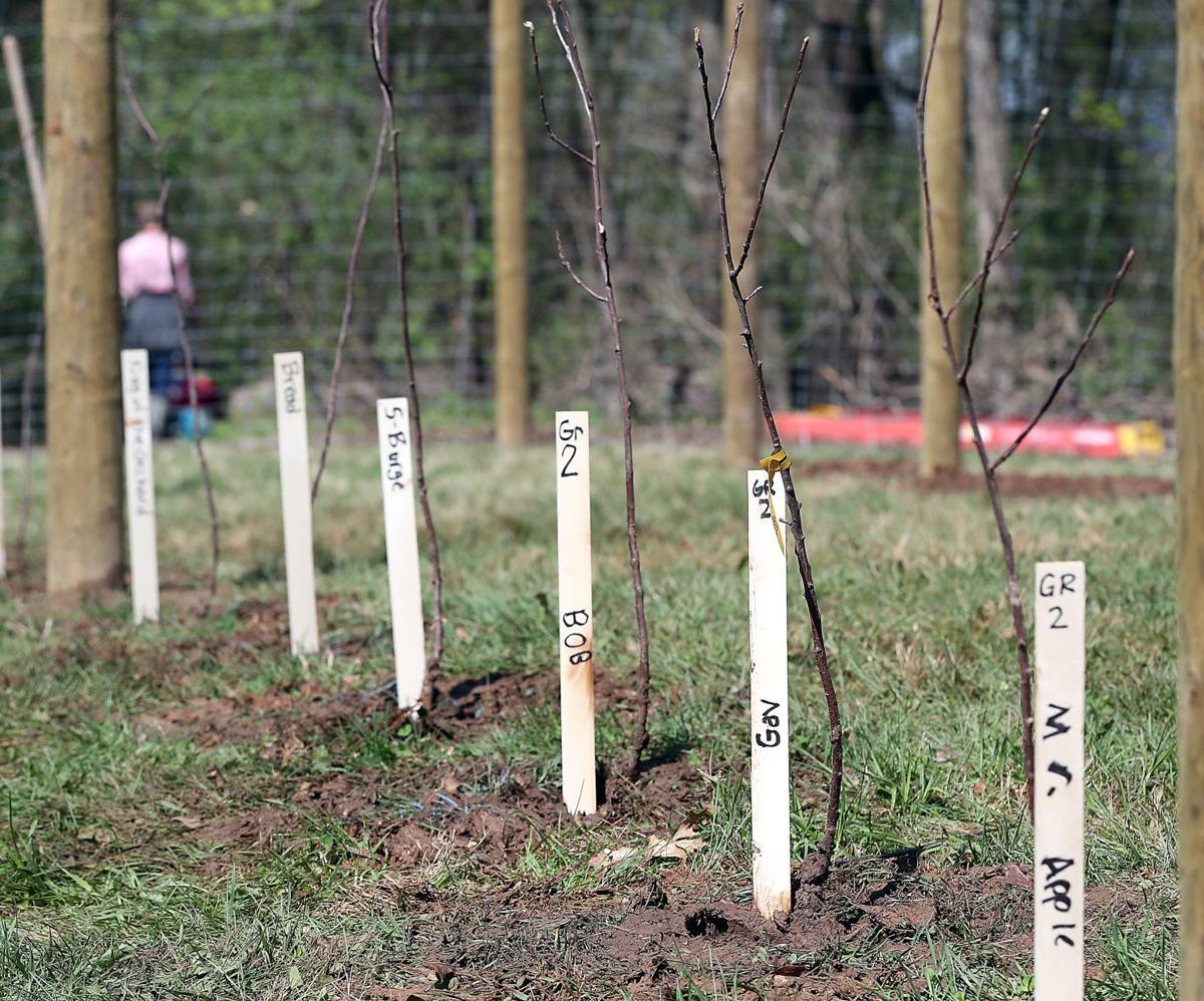 Viking students named trees.
