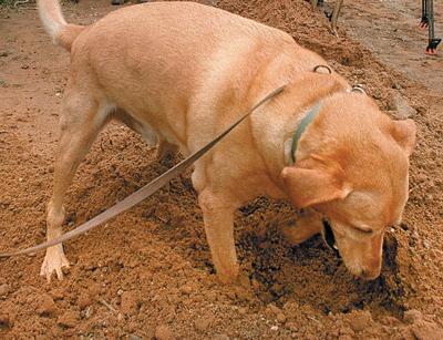 Ground Digging Dog