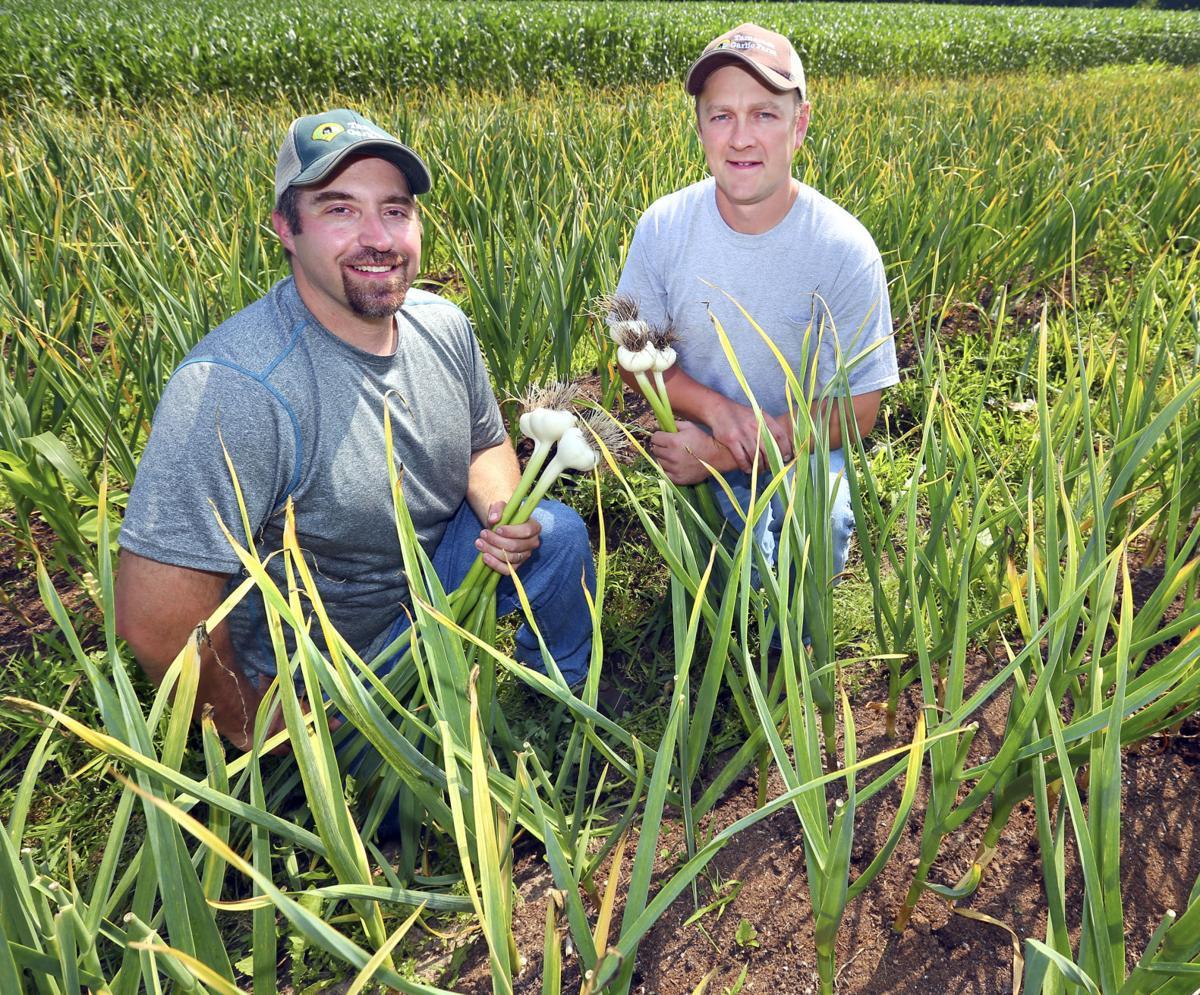 Tamarack Garlic Farm in Trempealeau County has strong year