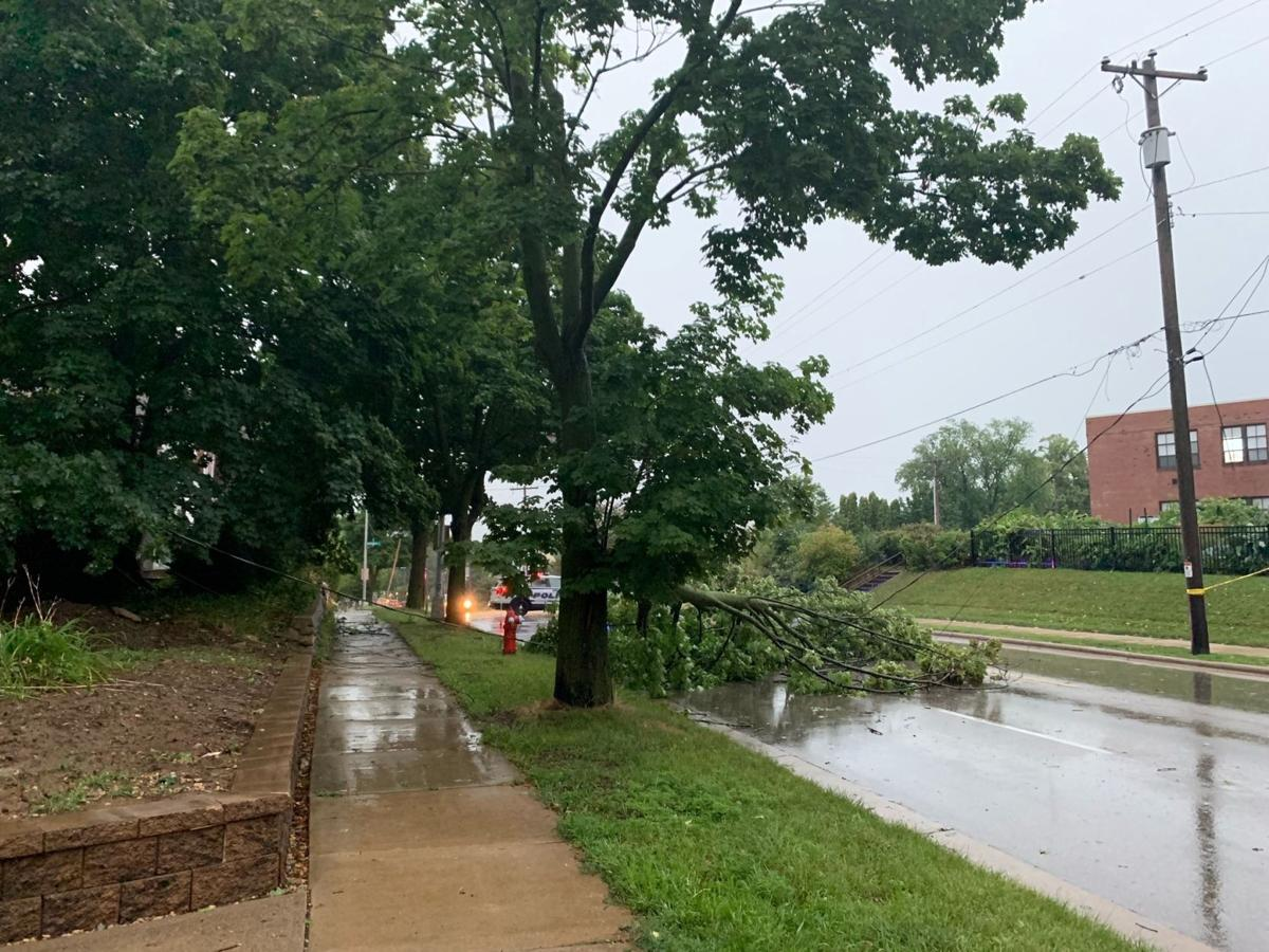 Tree down from storm, State Journal photo