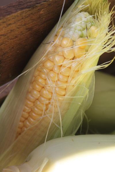 Corn 7 (copy)