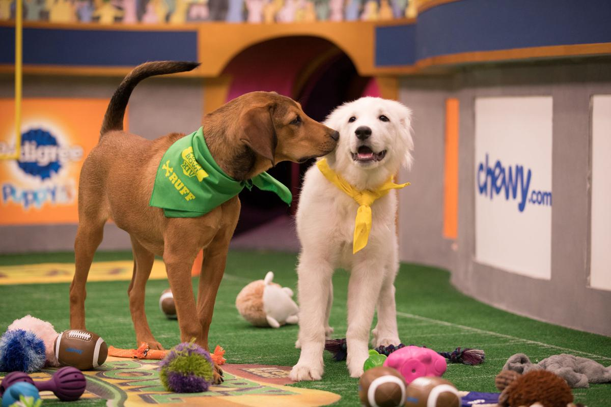 ENTER TV-PUPPYBOWL 1 LA