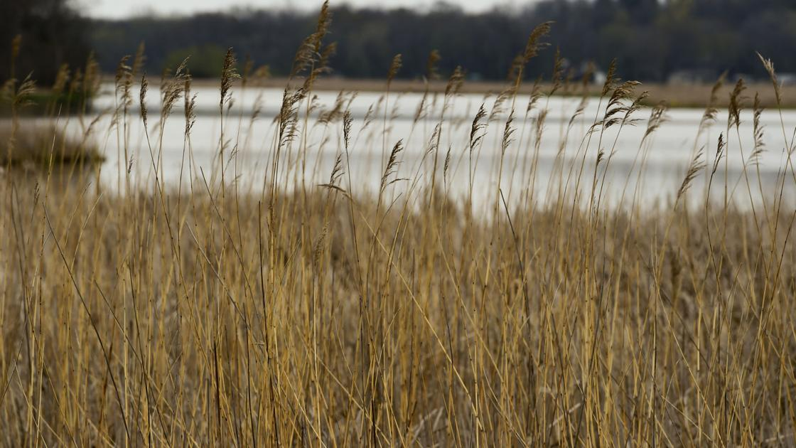 Valley Stewardship Network to host virtual wetlands presentation - La Crosse Tribune
