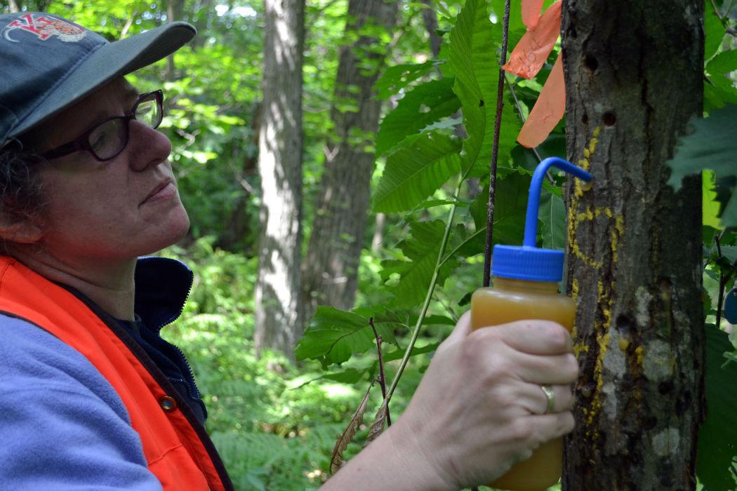 Treating trees