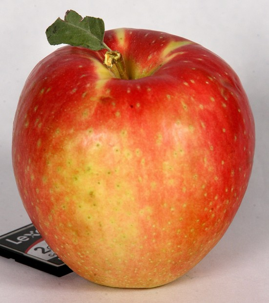 Apple Close Up.jpg