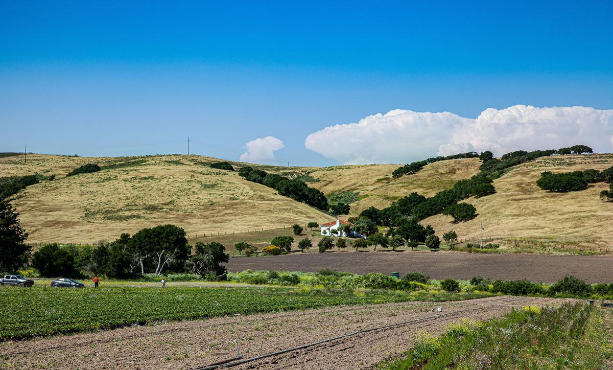 Farm, ranches and vineyards, taxed as agricultural land, continue to preserve the valley  s natural scenery near Lompoc, Calif.