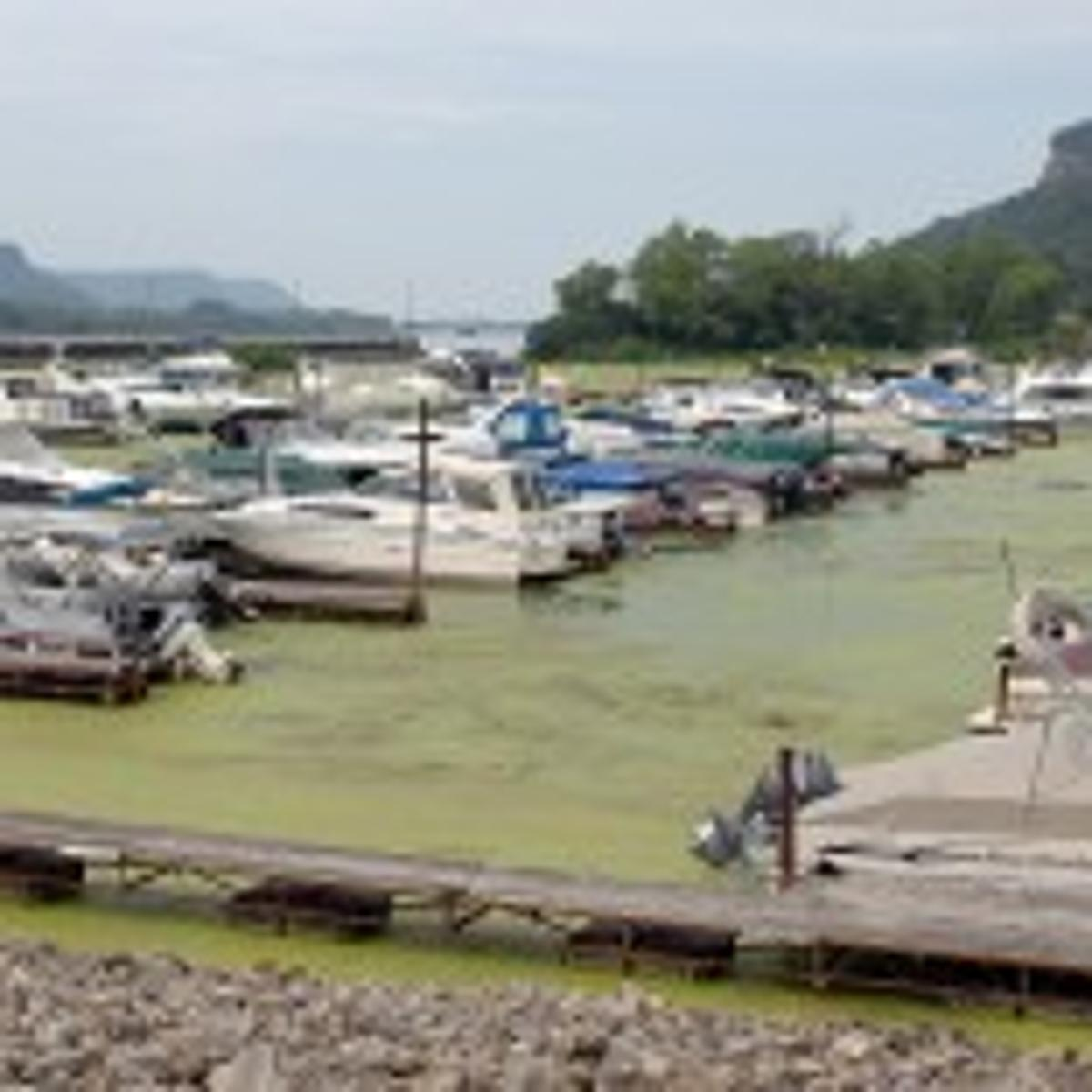 Trempealeau marina owner: Drawdown killed business, fish