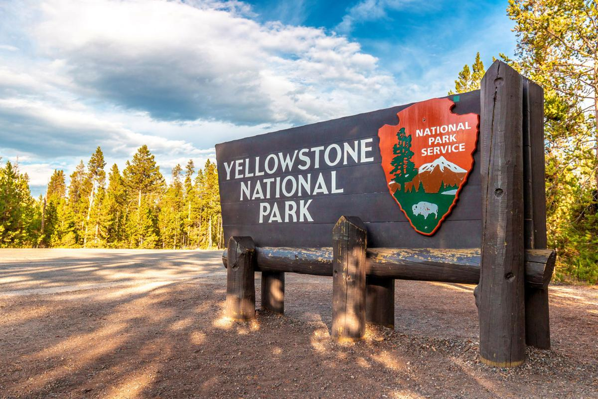 A 72-year-old woman was gored by a bison at Yellowstone National Park when she tried to take a picture