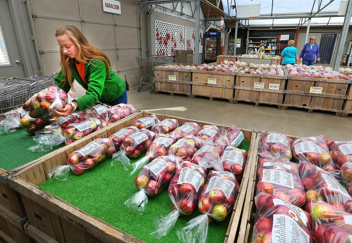 Fall harvest keeps La Crosse area apple growers busy