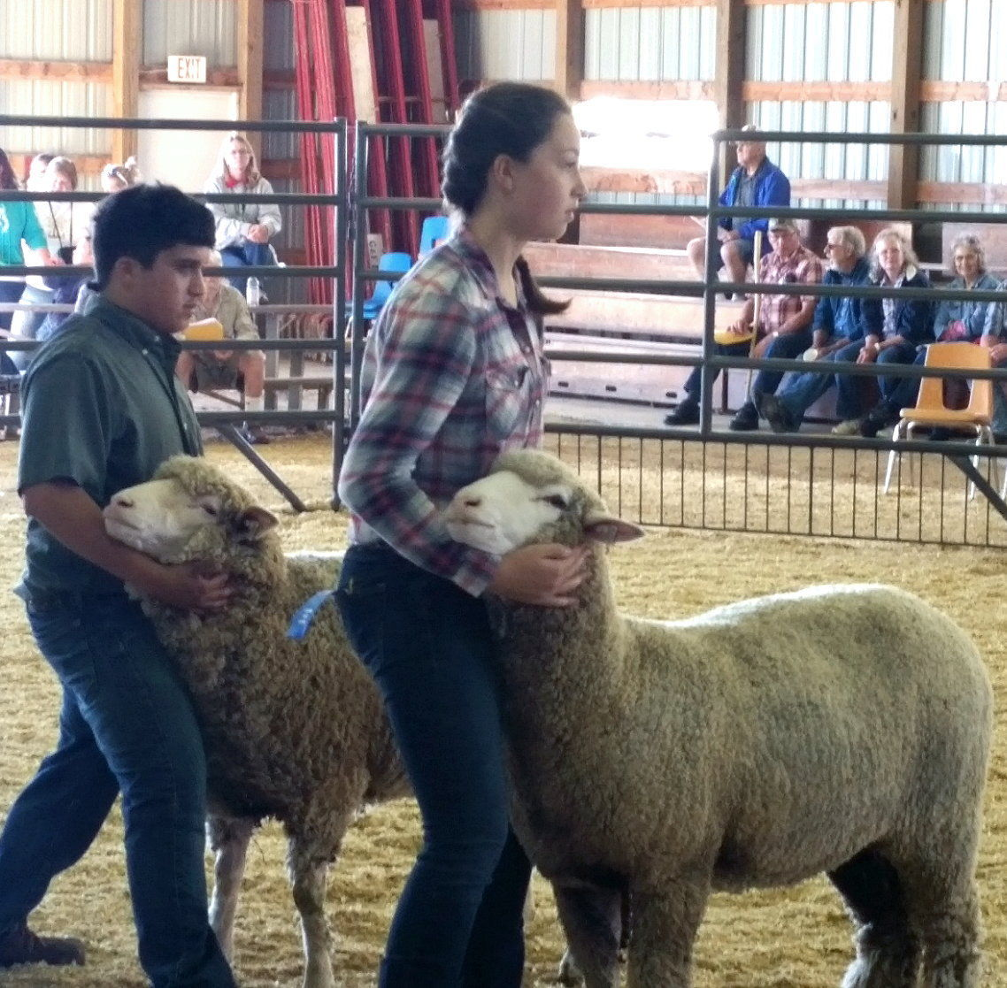 Dunnum wins Wisconsin Junior Targhee Sheep Association award