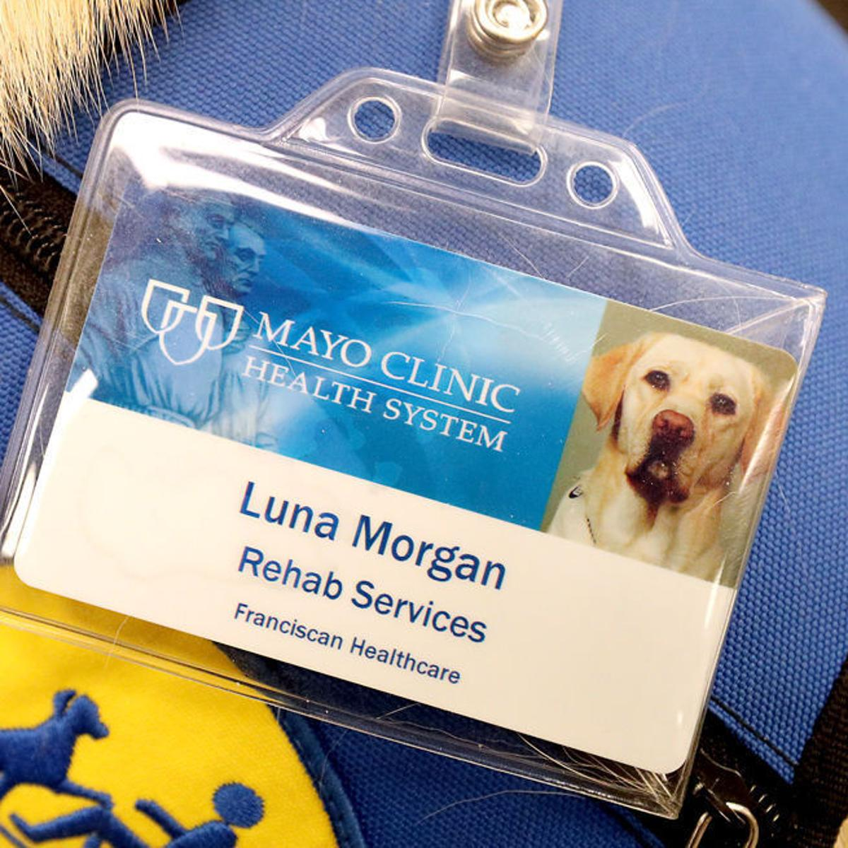Luna the Lab offers her skills to Mayo Clinic patients in La