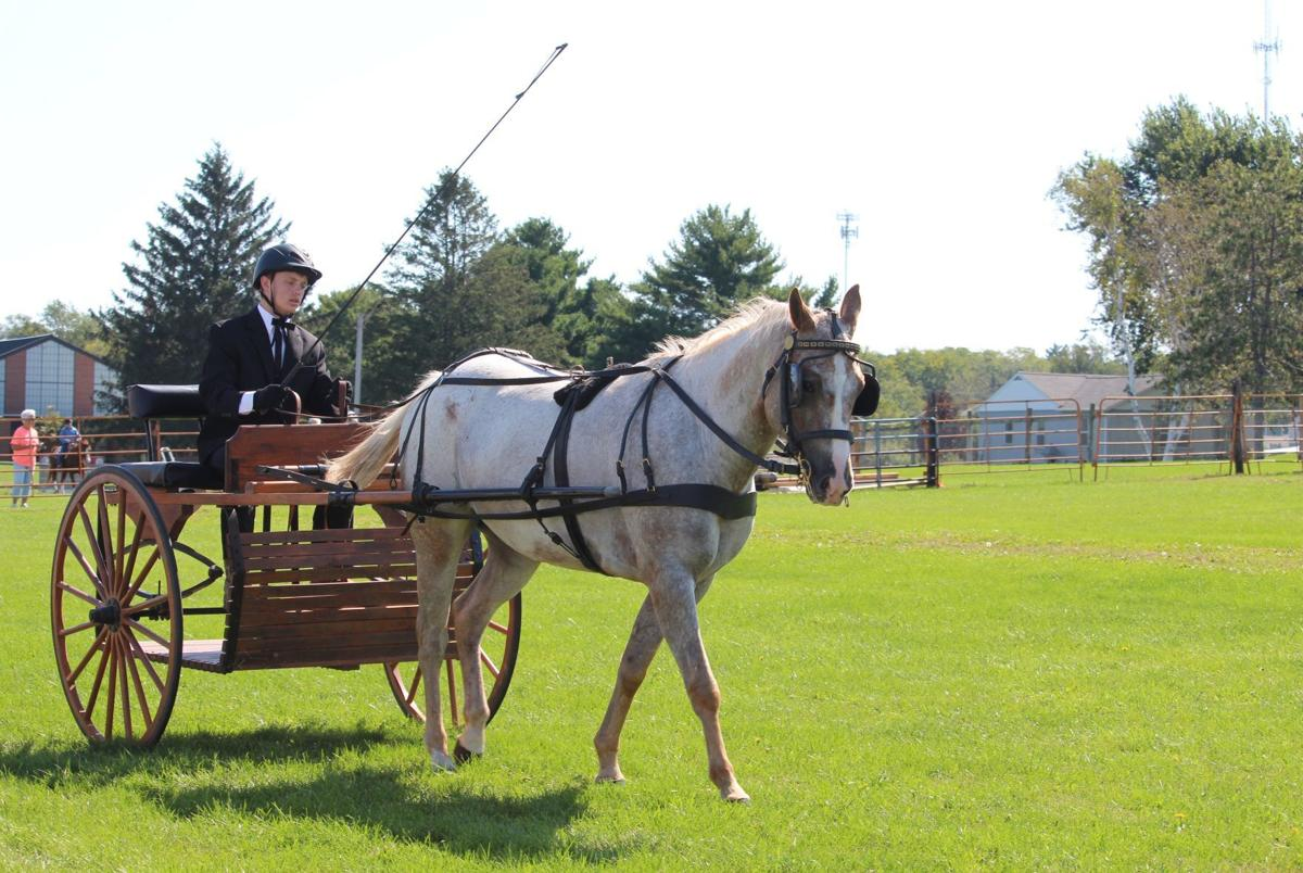 Riding in the show ring