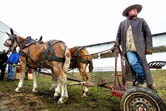 Horse Mule Sale Kicks Into Gear News Lacrossetribune Com
