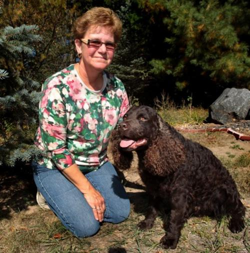 American Water Spaniel Is Fancier Than He First Appears Local News Lacrossetribune Com