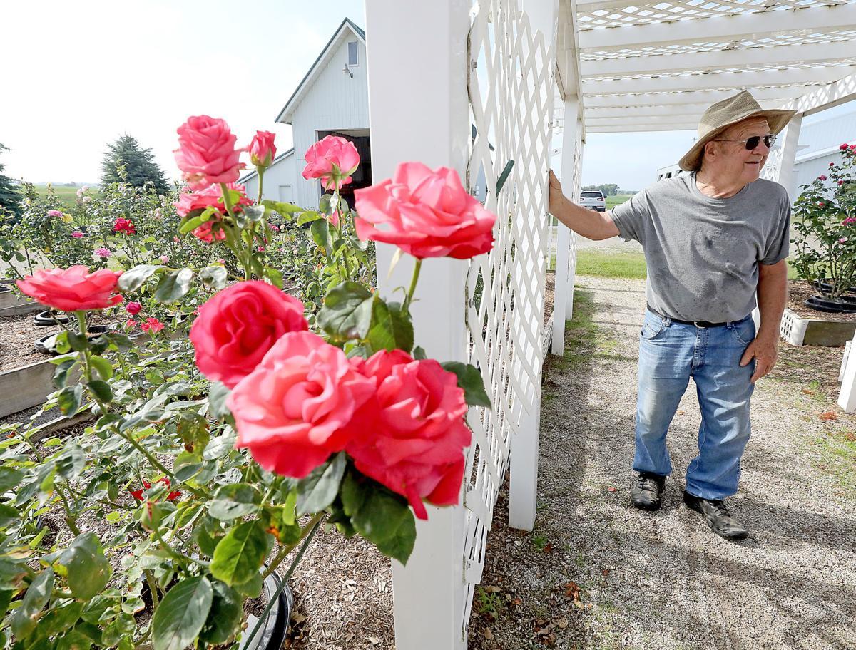 Delavan man tends 400 rose bushes in memory of his wife