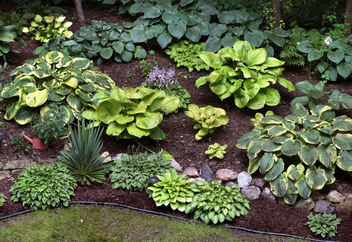 Tanke Garden 1