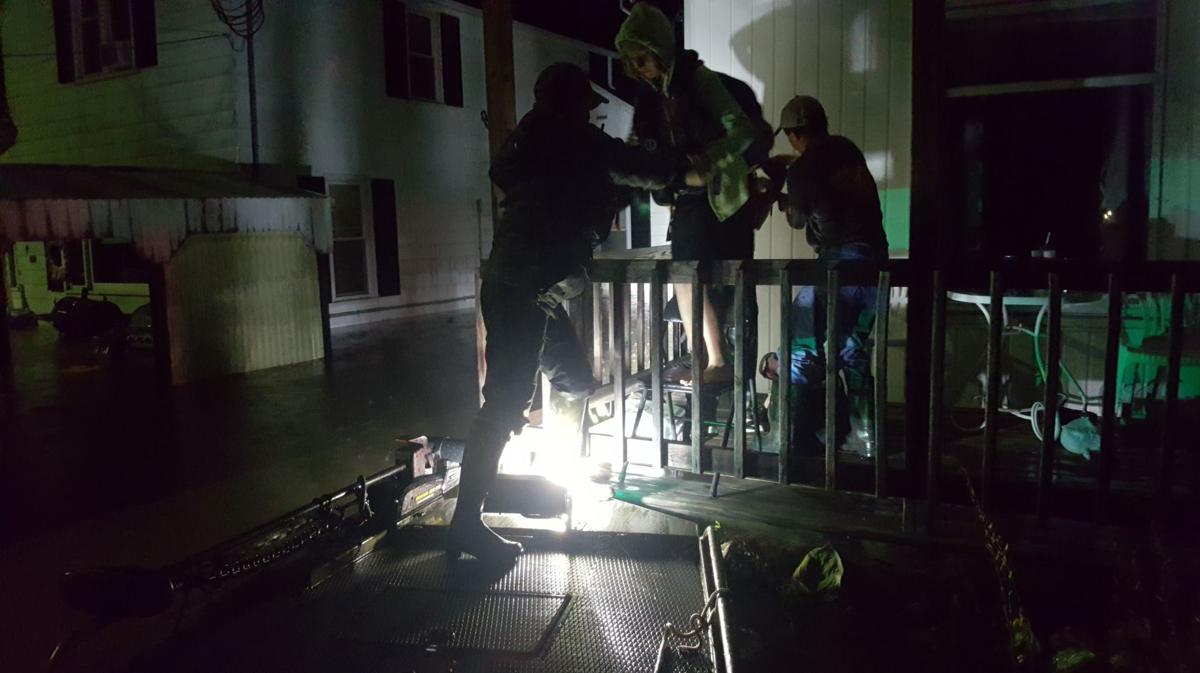 Viola rescue by dark