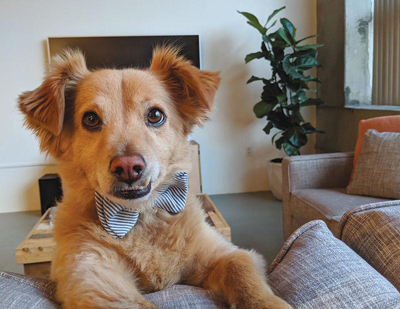 DTLA'S Best Pet Contest | Los Angeles Downtown News