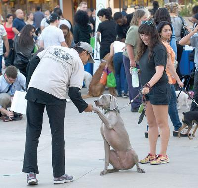 LAPD Focuses on  Pet Safety at New Fair