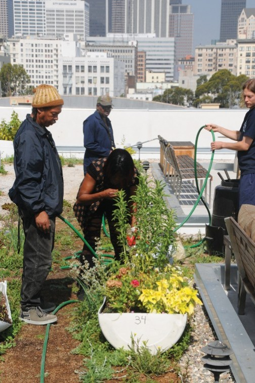 A Community Garden Blooms on a Skid Row Rooftop