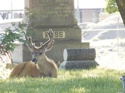 11-20-19 ODFW feeding deer can kill them