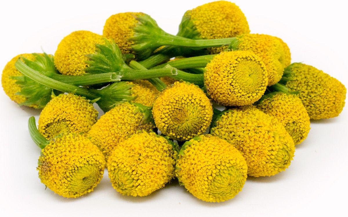 The Zambu Flower: 'Szechuan Button'
