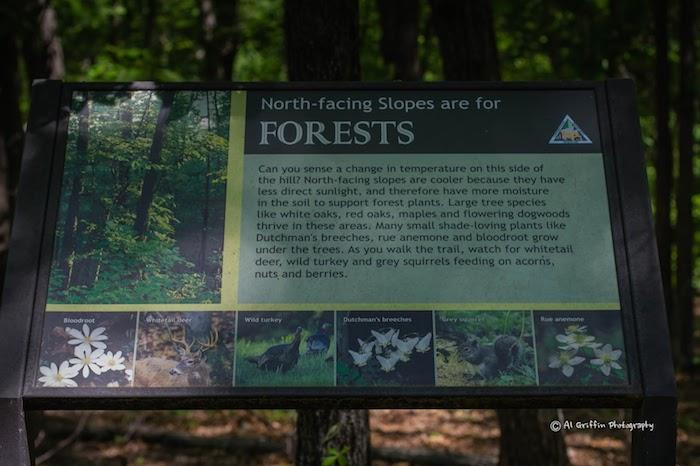 North Facing Slopes