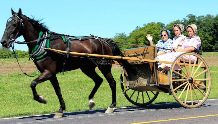 Mennonite Horse-And-Buggy