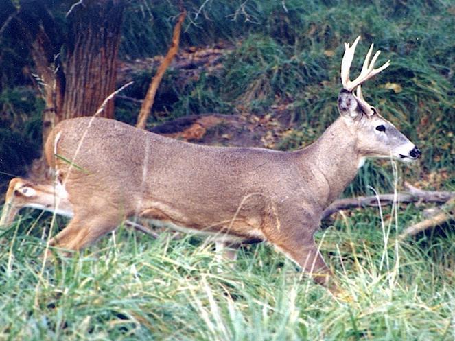 Deer Hunting Weekend Weather Forecast [WEEKEND FORECAST] | Lake Weather Forecast & Radar – Lake of the Ozarks - Lake Expo