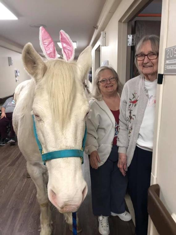 Forget Me Not! Costumed Horses Bring Joy To Lake Area Nursing Home Residents