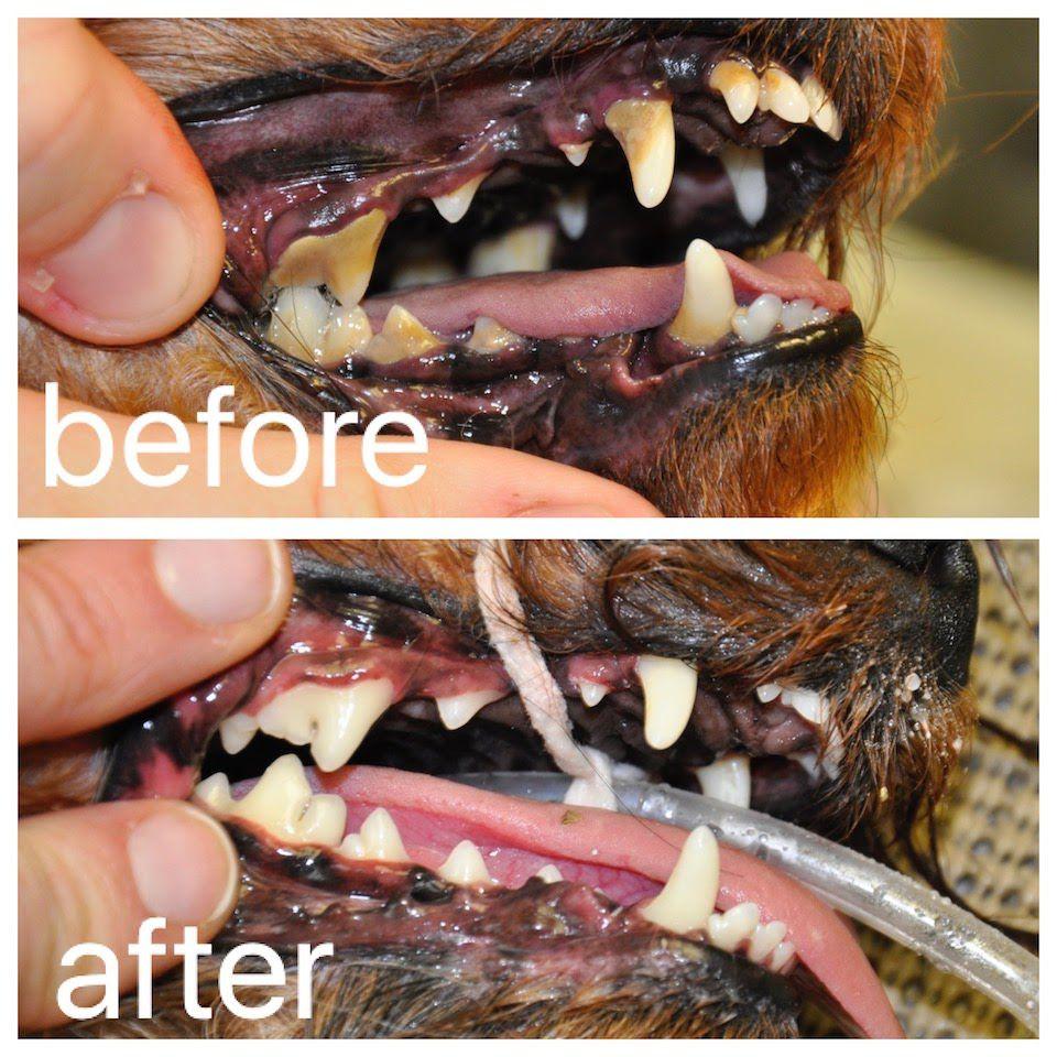 LOAH Dental Before & After