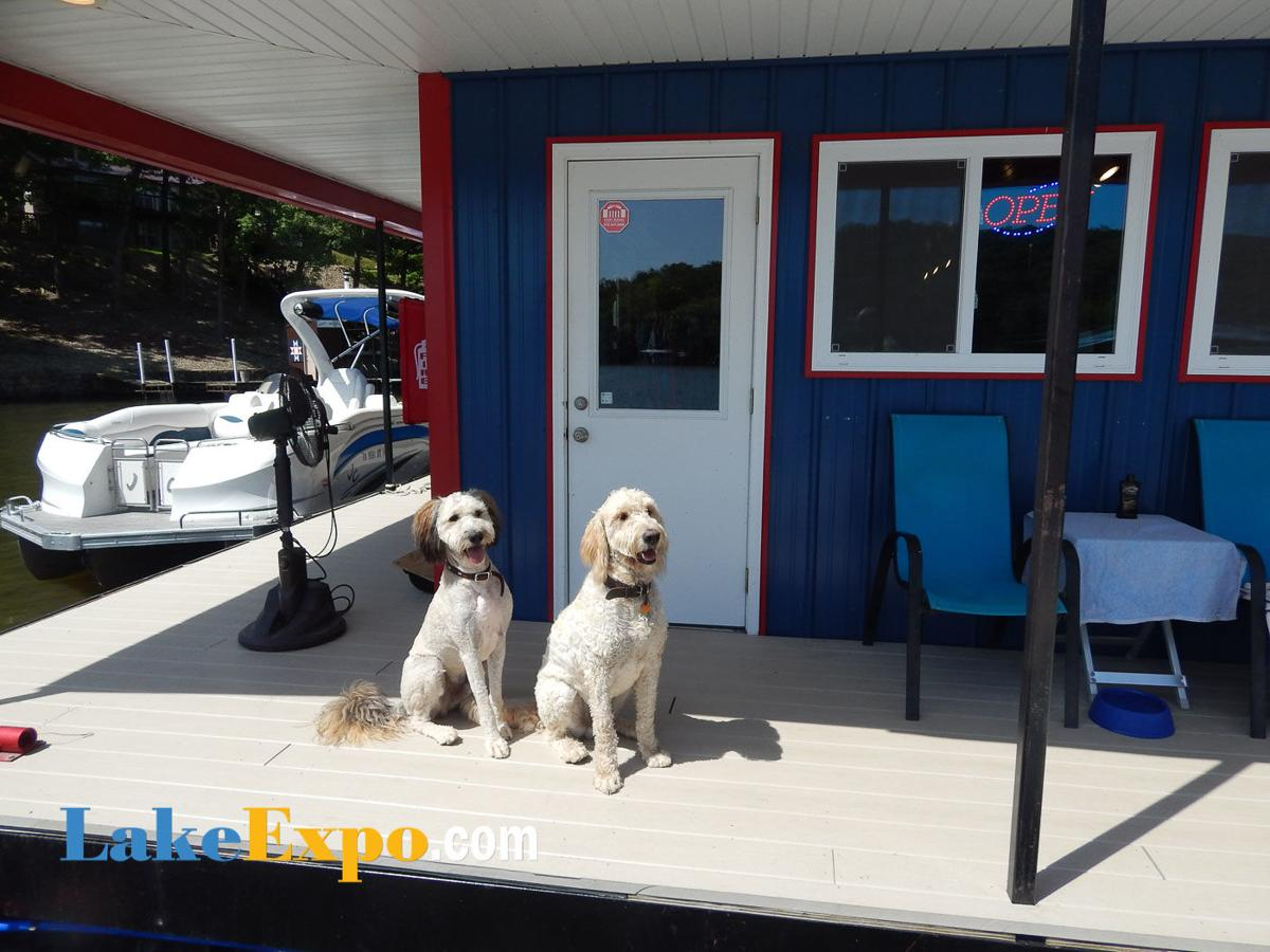 Dock Dogs at Mystic Marina