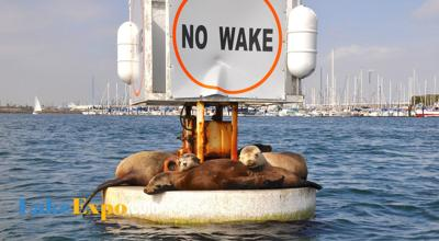 no wake_sea lions_seals_CREDIT_sara halverson-1.jpg