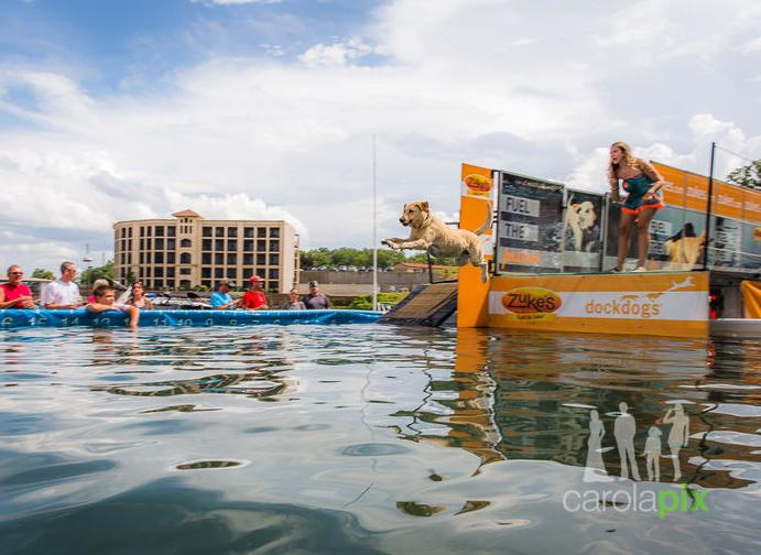 The Canine Cannonball at Dog Days