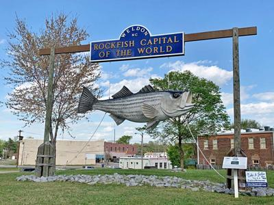 Rockfish Capital