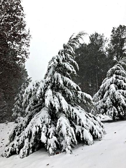 Snow Dec 2018 News Lakegastongazette Observer Com
