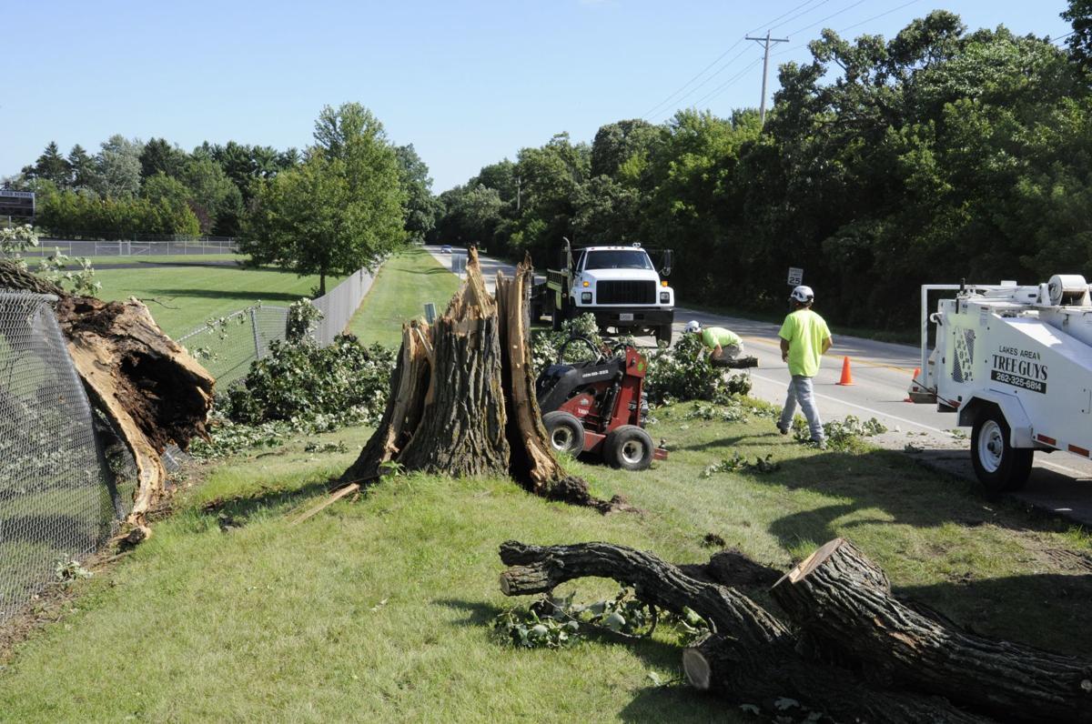 Tree Damage 3