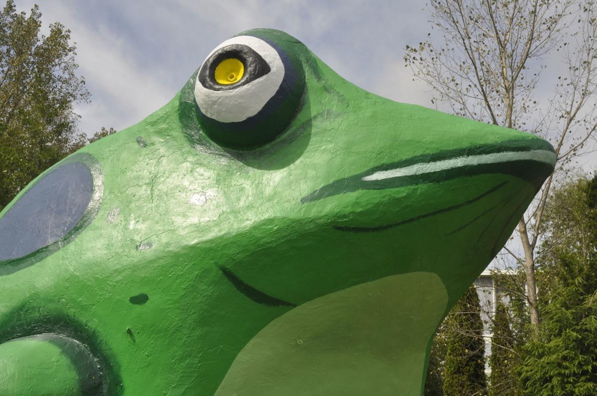 Fontana frog close up