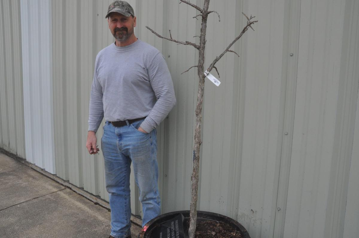 Jon Foster, city arborist, stands next to the burr oak tree and plaque that will be dedicated