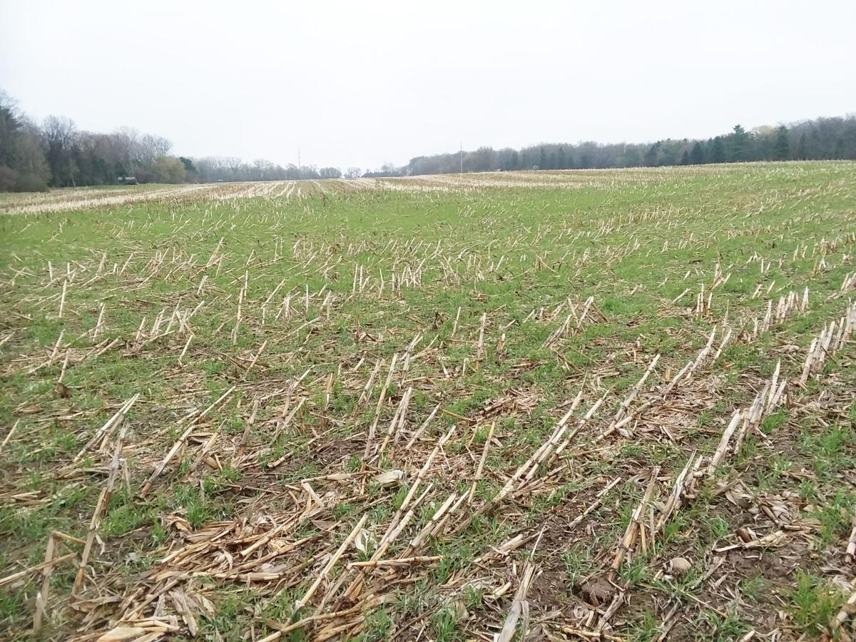 Farmers cover crop