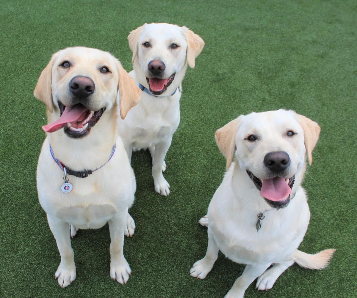 3 doggiie reunion pic