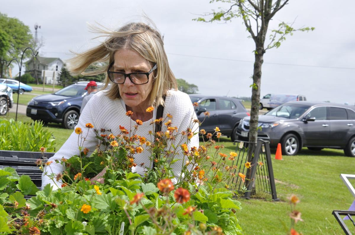 Cindy Wilson at plant sale Pearce's Farm Stand