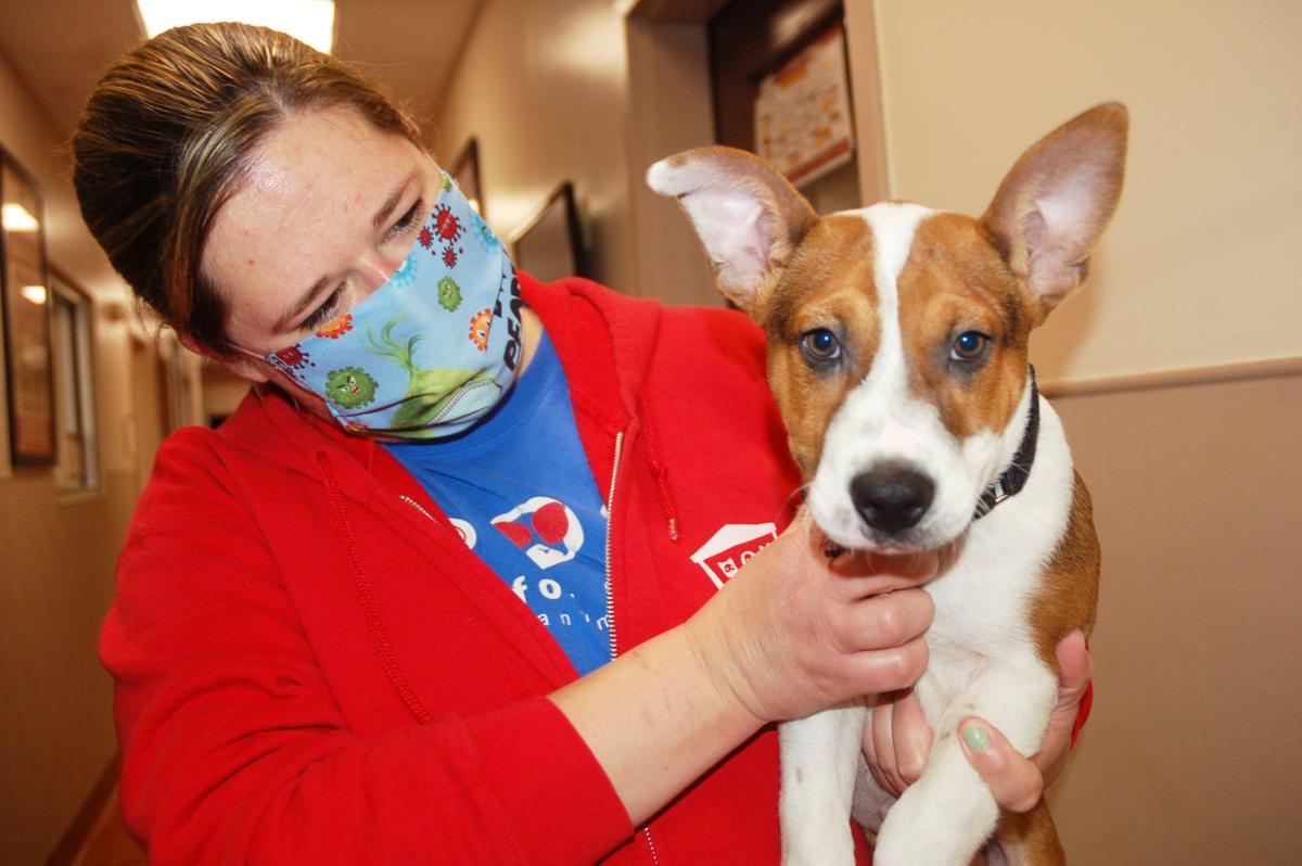 Sarah Krueger and dog at Lakeland Animal Shelter