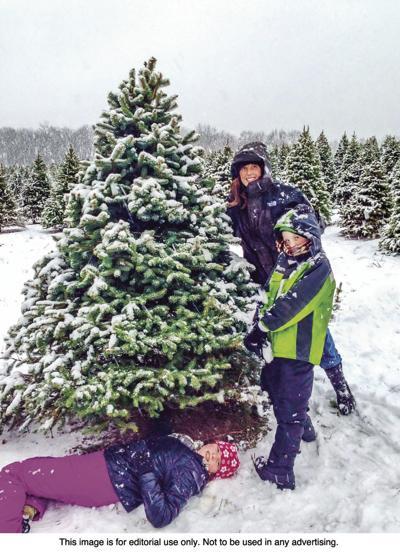metro christmas tree - Silvertip Fir Christmas Tree